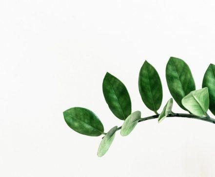 Die Fliesen von Cotto D'Este werden mit großer Aufmerksamkeit für die Umwelt hergestellt.